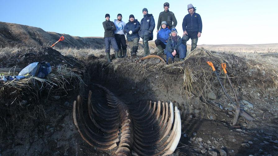 Ученые случайно откопали останки жившей 20 млн лет назад морской коровы