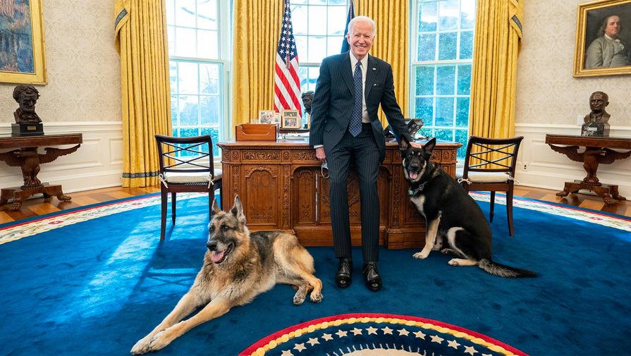 Чемп и Мейджор, немецкие овчарки Джо Байдена и его супруги Джилл, переехали в Белый дом из Делавэра 24 января 2021 года