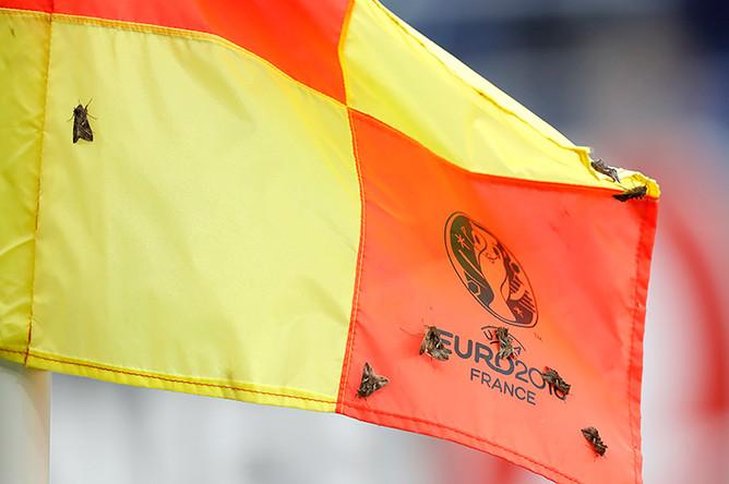 Мотыльки во время финального матча Евро-2016