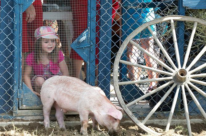 Ежегодный 37-й фестиваль свиней в Канаде