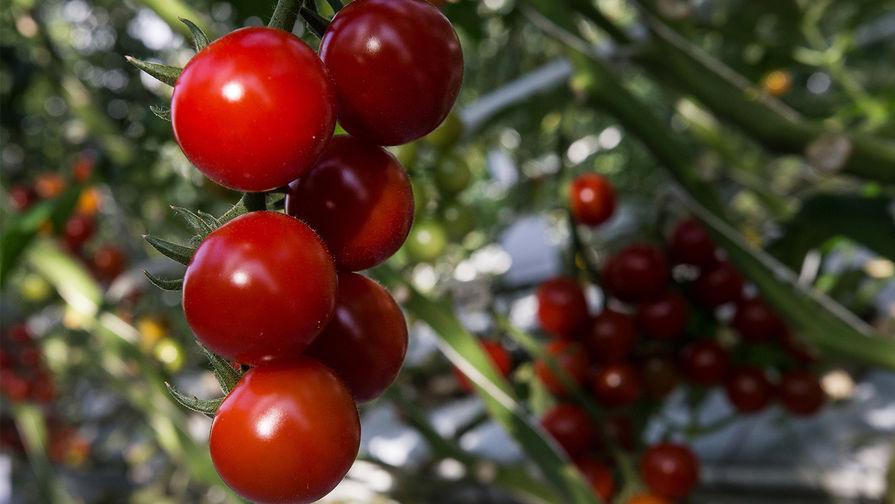 Россельхознадзор разрешит ввоз томатов еще с четырех предприятий Турции