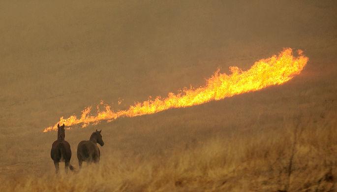 Лесной пожар в поле около города Напа, Калифорния, 9 октября 2017 года