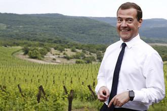 Российский премьер Дмитрий Медведев в фермерском кооперативе около Ялты в Крыму, 2015 год