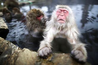 Японские макаки в горячих источниках заснеженной долины в городе Яманучи