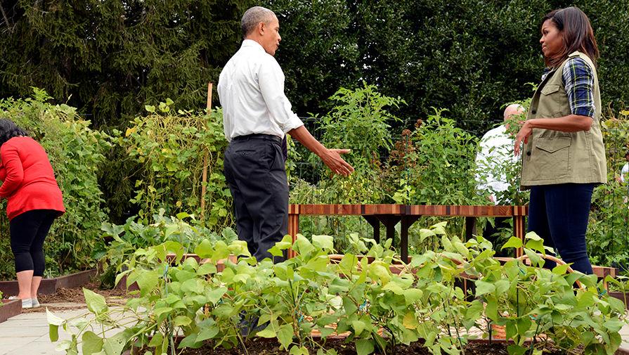 Президент США Барак Обама с супругой Мишель в огороде Белого дома, октябрь 2016 года
