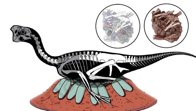 «Отдал свою жизнь»: динозавр высиживал яйца и окаменел
