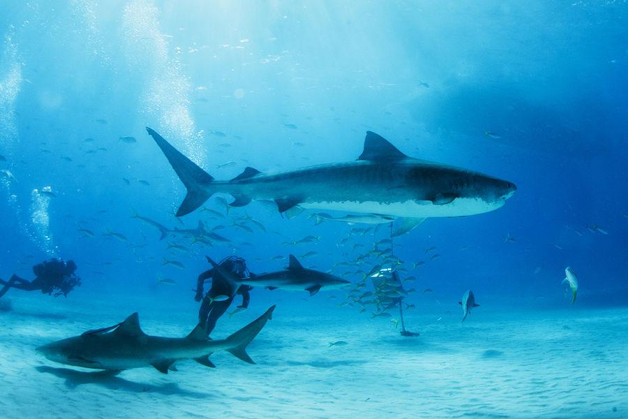 РЎРњР?: кишечник акул может помочь улучшить технологию насосов дляР¶РёРґРєРѕСЃС'Рё