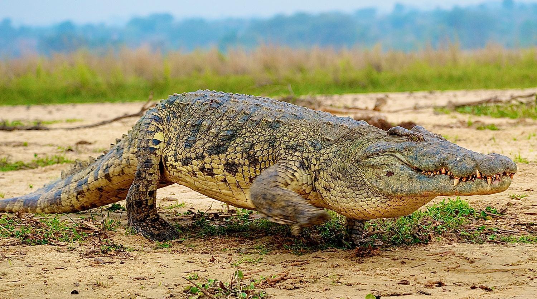 Аллигатор забрался в дом и уничтожил винный погреб в США