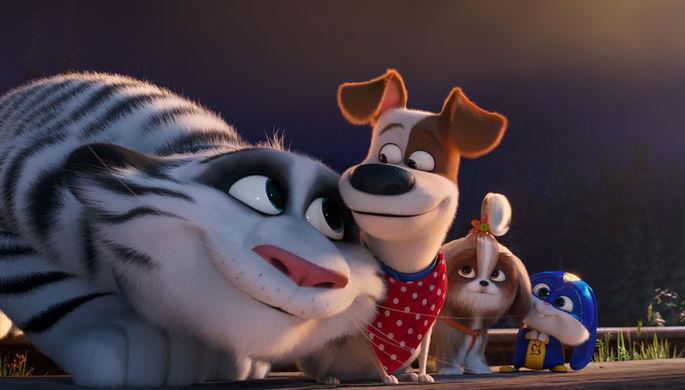 Кадр из фильм «Тайная жизнь домашних животных 2»