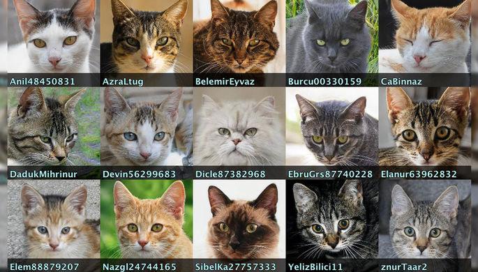 Порно, боты и коты: в Twitter обнаружили сеть фейковых аккаунтов