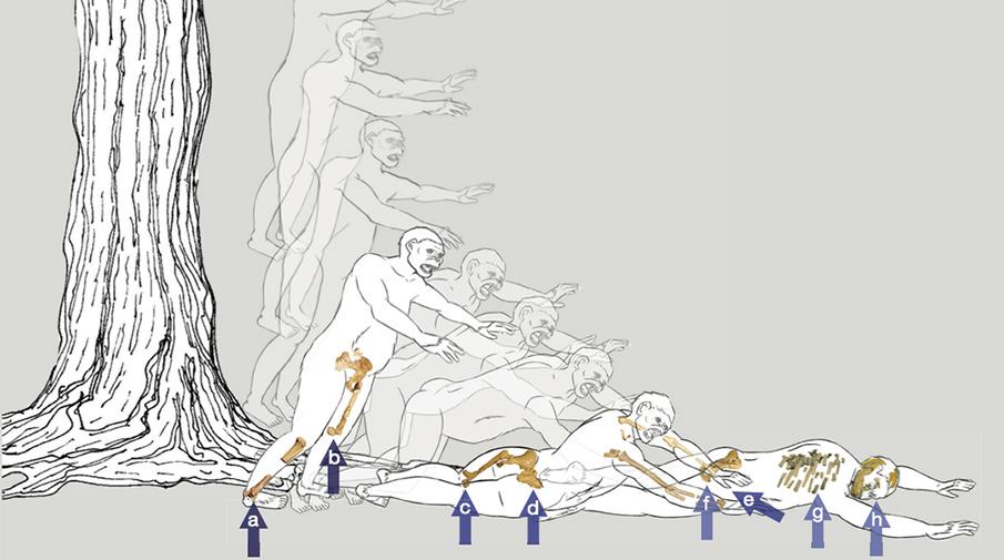 Ранний предок человека Люси погибла, упав сдерева