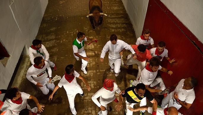 В Испании при забегах быков пострадали 28 человек