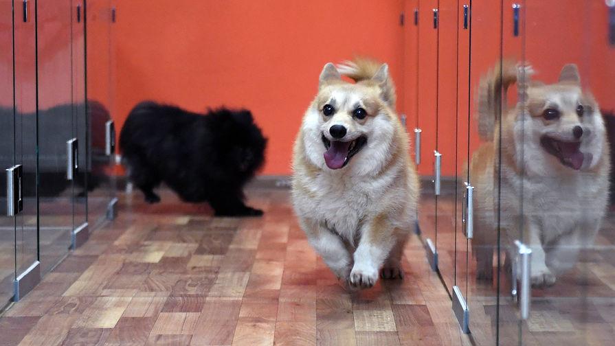 В России решили маркировать домашних животных