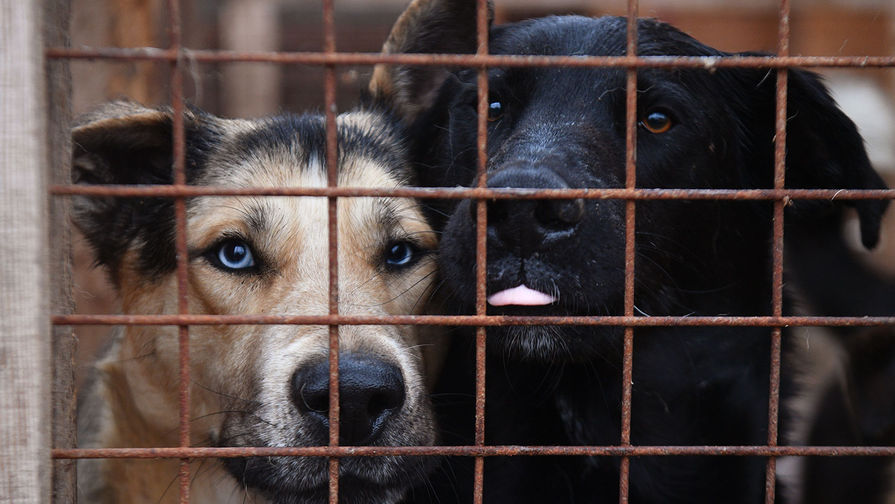 Власти Великобритании одобрили эвакуацию собак и кошек из Кабула