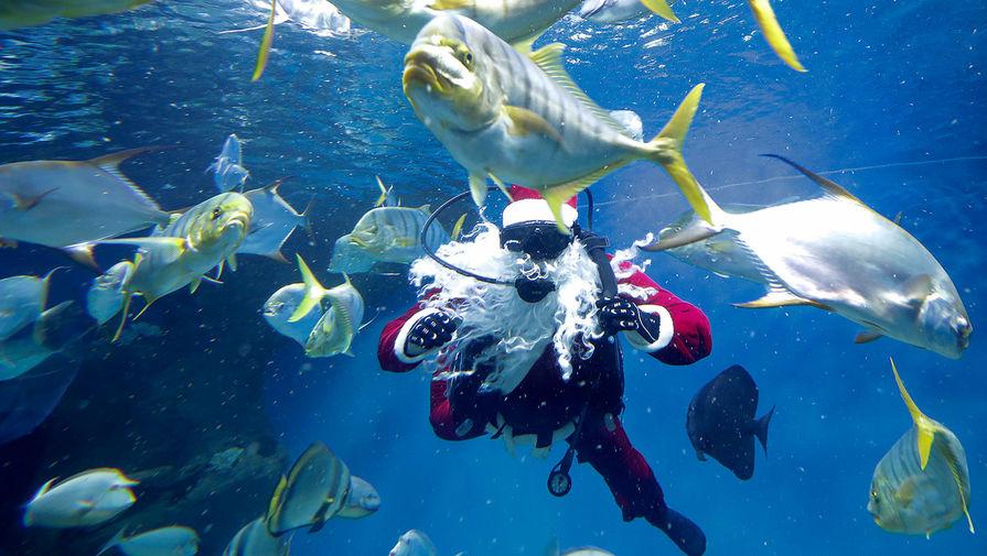 Дайвер в костюме Санта-Клауса в аквариуме с рыбами в Центре океанографии и морской биологии «Дельфиния», 17 декабря 2019 года