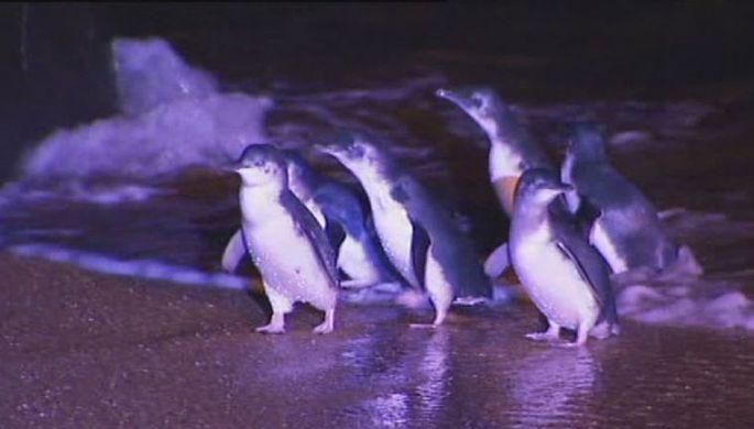СМИ: на Марсе нашли пингвинов