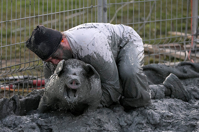 «Гонка свиней» на ежегодном фестивале в Канаде