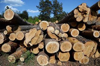 За деревьями леса не видно: что остановит хищения