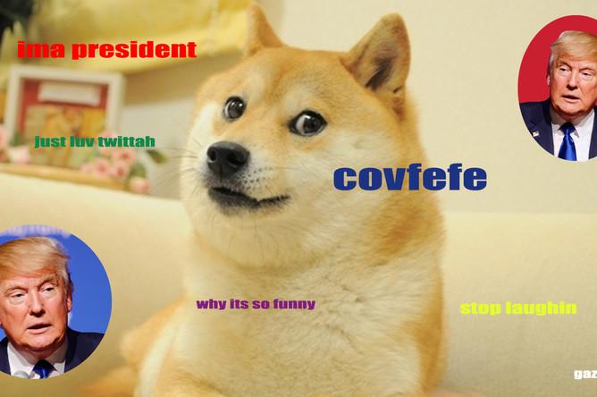 Doge и президент США Дональд Трамп, коллаж