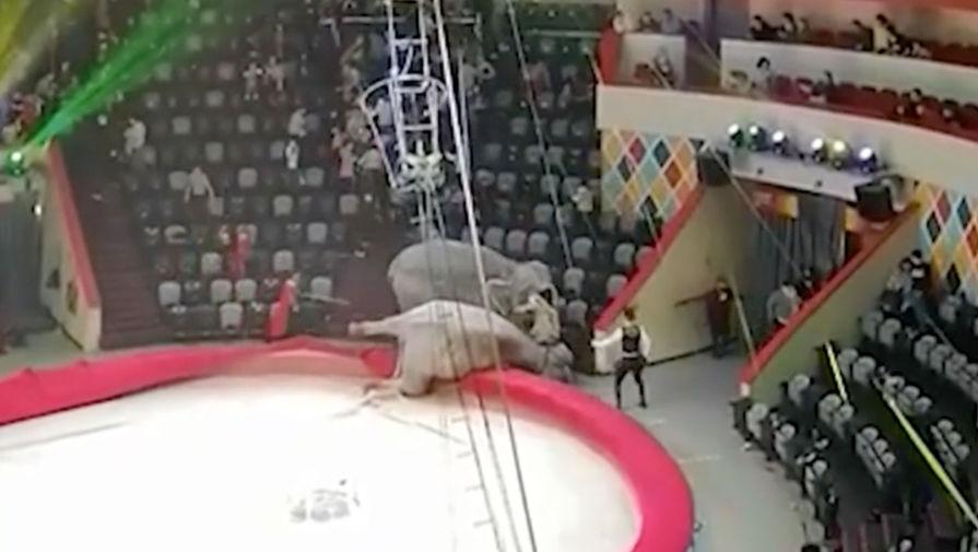 Дрессировщик рассказал, почему в казанском цирке подрались слоны