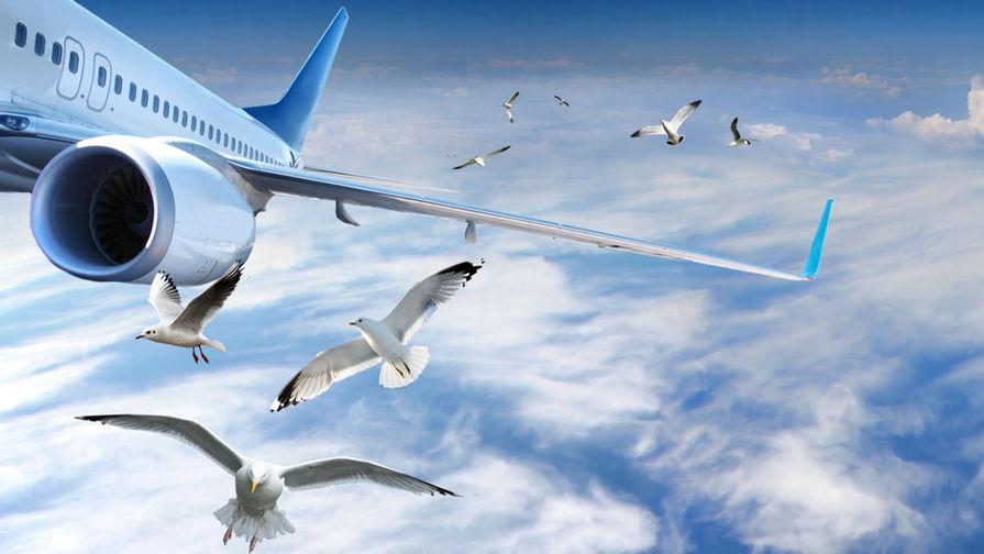 «Чем тяжелее, тем ощутимее ущерб»: как птицы повреждают самолеты