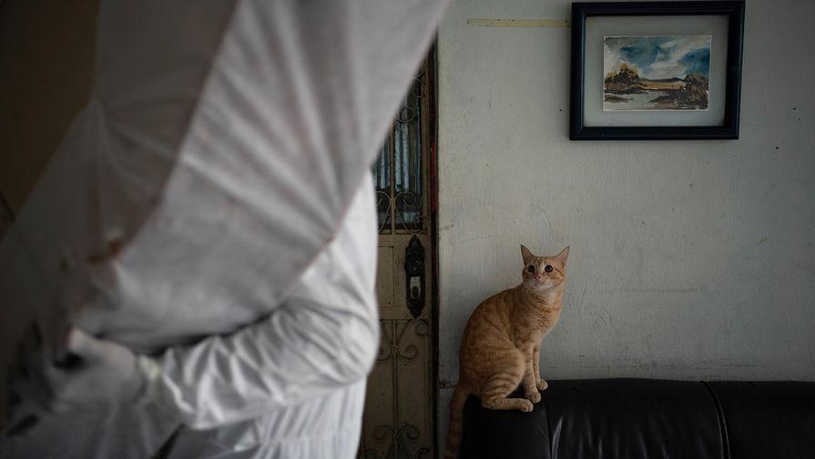 Сотрудник ритуальной службы выносит тело мужчины, который умер от коронавируса у себя дома в Манаусе, Бразилия