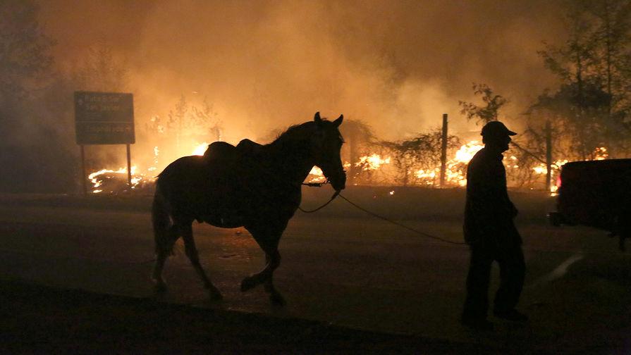 Лесной пожар у города Санта-Ольга в чилийской области Мауле, 25 января 2017 года