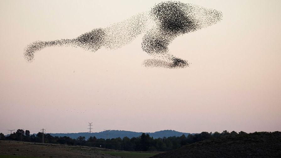 Миграция птиц в Израиле, 6 января 2020 года