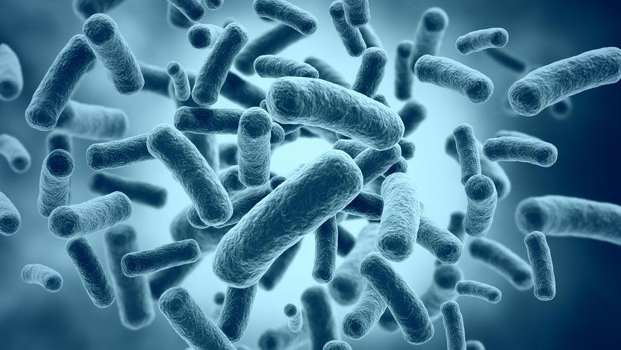 Десятки тысяч видов вирусов в кишечнике человека оказались неизвестны науке