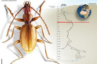 В расположенной на Кавказе самой глубокой пещере мира обнаружили новый вид жуков