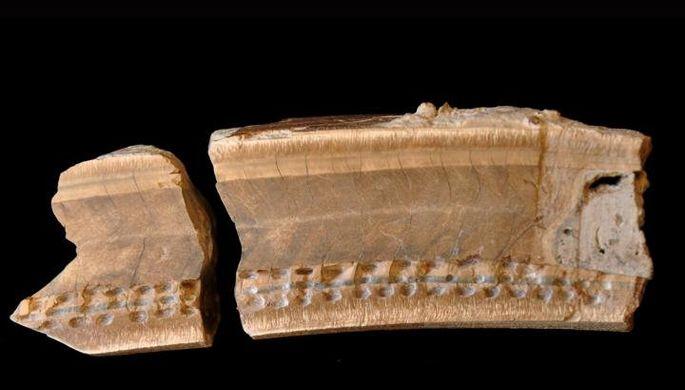 Зуб четырехметрового ленивца найден в Центральной Америке