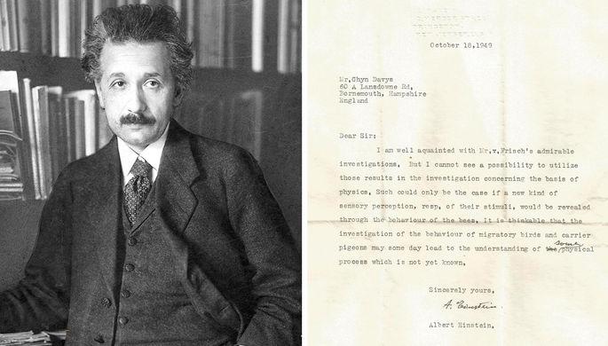 О птицах и пчелах: найдено ранее неизвестное письмо Эйнштейна