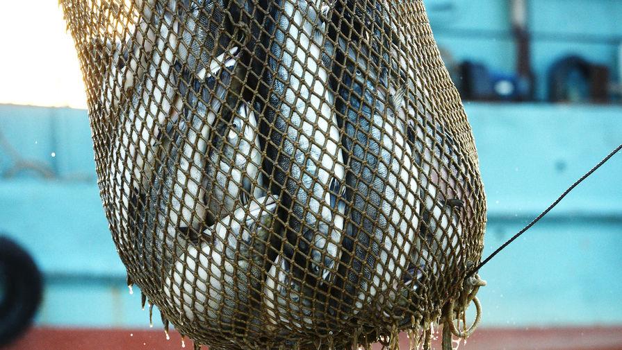 Британия получила от ЕС рыбный ультиматум