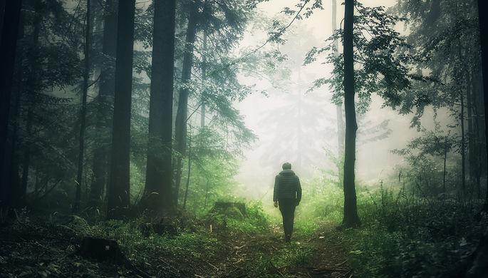 Группа риска: кому опасно ходить в лес