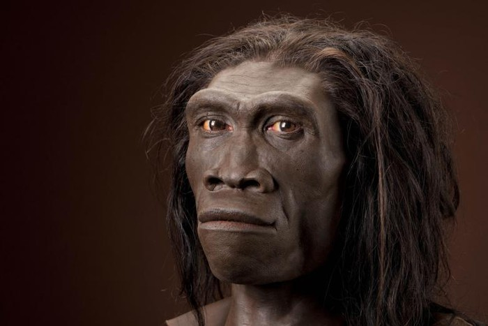 homo-erectus-pic700-700x467-68355.jpg
