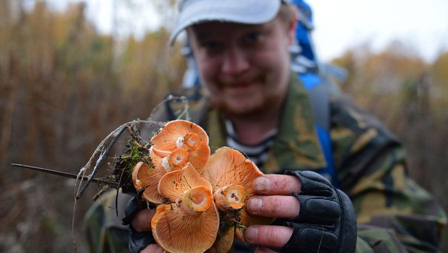 Как лесные грибы стали мировым деликатесом