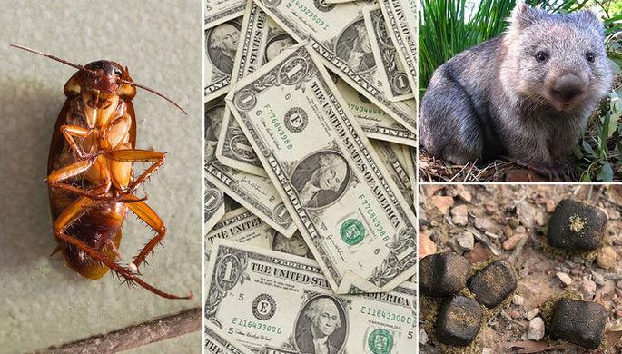 Мошонка почтальона и магнитные тараканы: кто получил Шнобеля