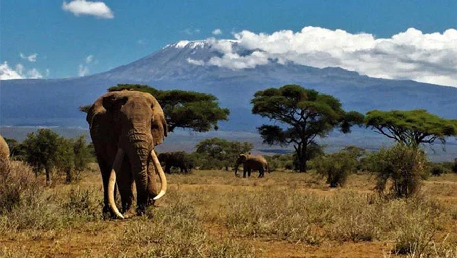 На Шри-Ланке запрещают вождение слонов в нетрезвом виде