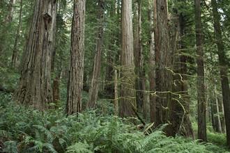 Национальный парк «Редвуд», Калифорния