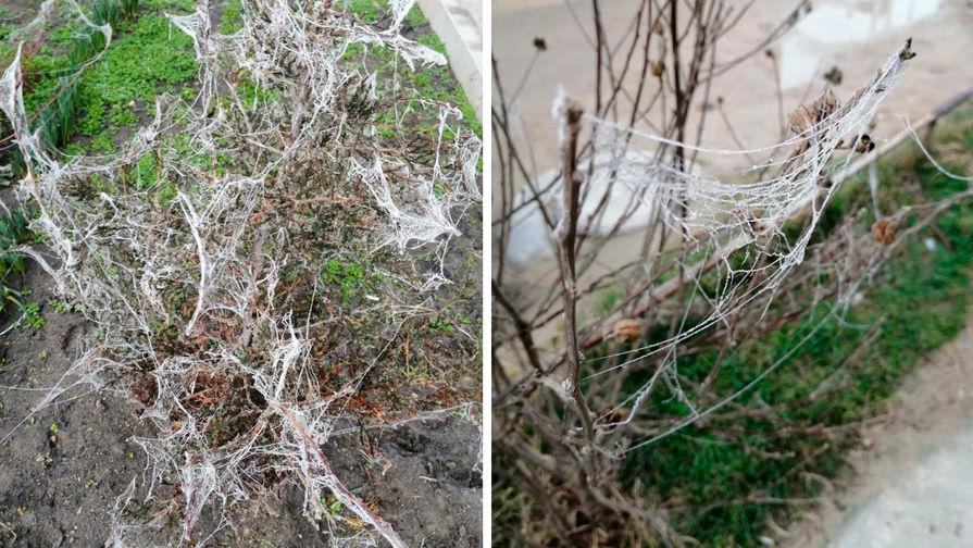Жители Анапы пожаловались на нашествие пауков