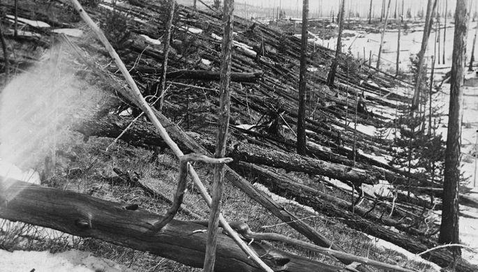 Вид обгоревшего леса в районе взрыва Тунгусского метеорита