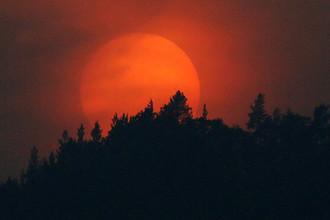 «Будто пришел конец света»: как Сибирь страдала от лесных пожаров