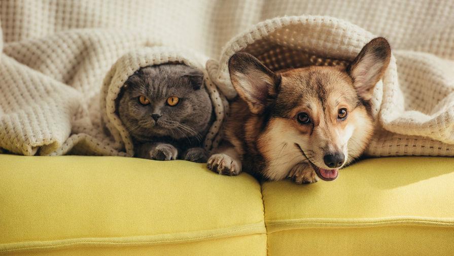 Ученые заявили о крайне низкой вероятности заразиться COVID-19 от кошек и собак