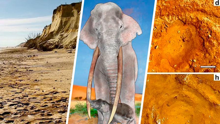 Тайна следов: как неандертальцы охотились на слонят