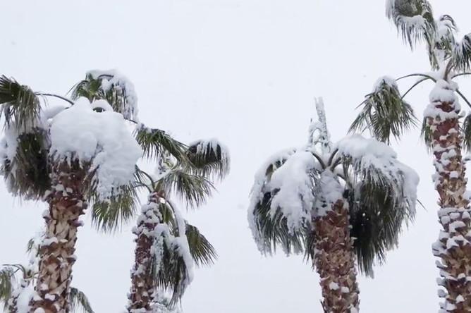 Снег в Лас-Вегасе, 22 февраля 2019 года