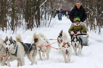 Павел Астахов (справа на втором плане) принимает участие в гонках на собачьих упряжках, 2015 год