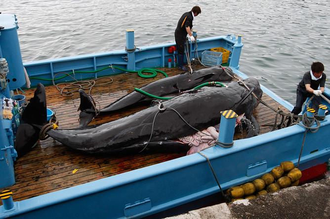 Картинки по запросу промысел китов в японии