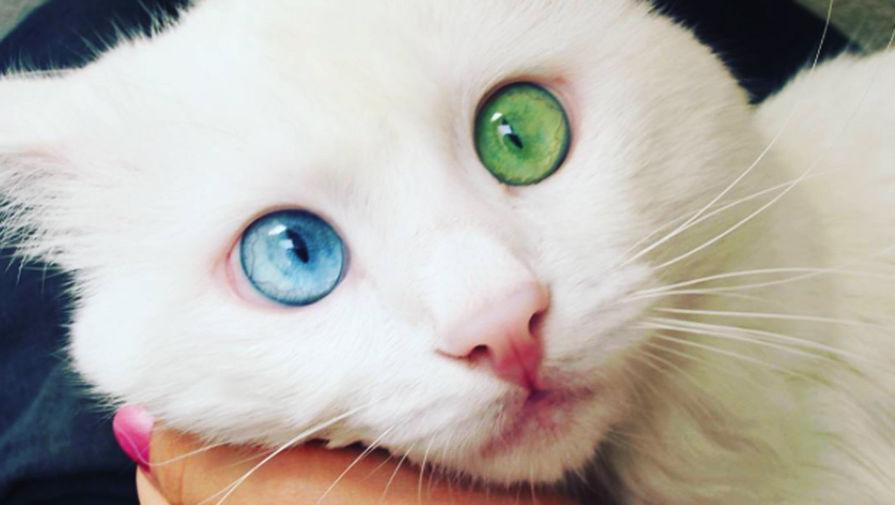 Самые красивый кот в мире фото
