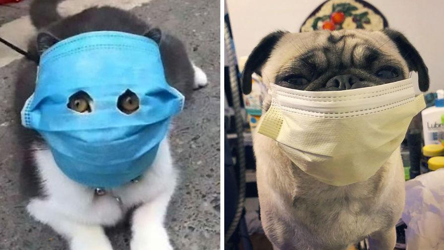 что такое коронавирус у кошек