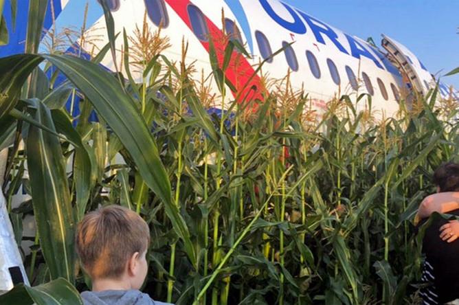 На месте аварийной посадки самолета A321 «Уральских авиалиний» в Подмосковье, 15 августа 2019 года